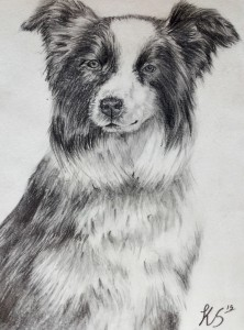 Custom Pet Drawing