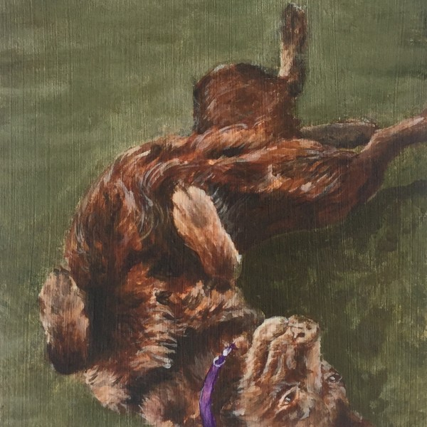 Chocolet labrador